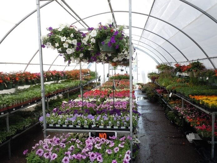 A greenhouse full of beautiful flowers.